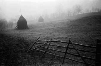 Figure 4: Hay ricks in Romania [photograph by Radu B. Chindris].