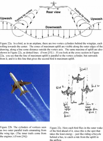 Figure 22: (22a.) In a bird, as in an airplane, there are two vortex cylinders behind the wingtips,   (22b.) The cylinders of vortices seen as two outer parallel trails and ,,, (22c). Here each bird flies in the outer wake of the bird ahead of it